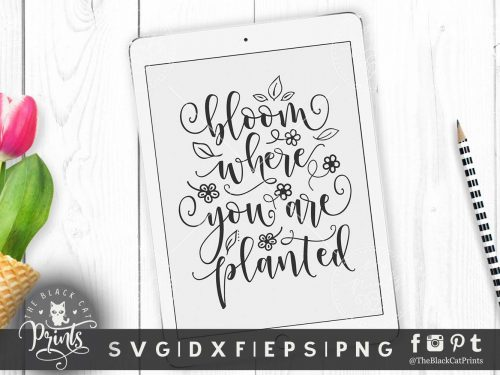 Bloom where you are planted svg