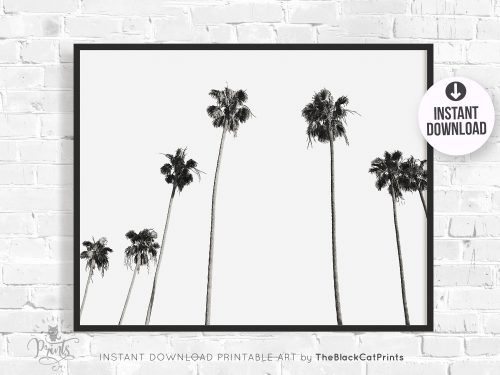 Palm Trees Photography Print Black & White