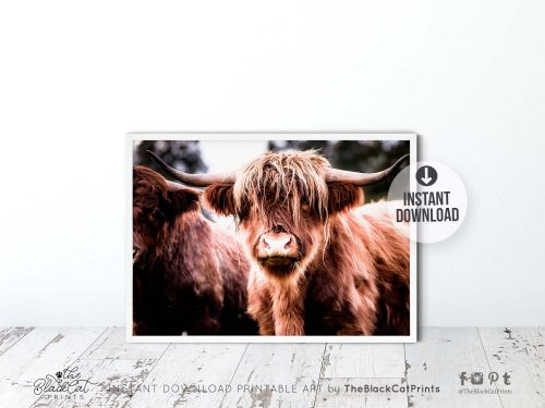 Highland Cow Photography Print