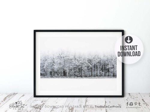 Winter Forest Landscape Photography Print