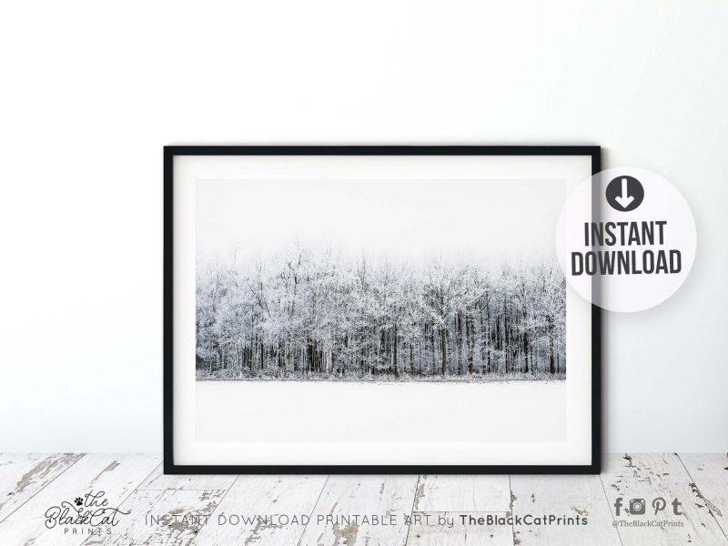 Winter Forest Landscape Photography Print